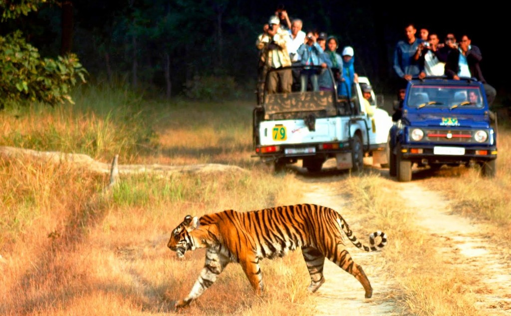 Tiger spotting at Jim Corbett
