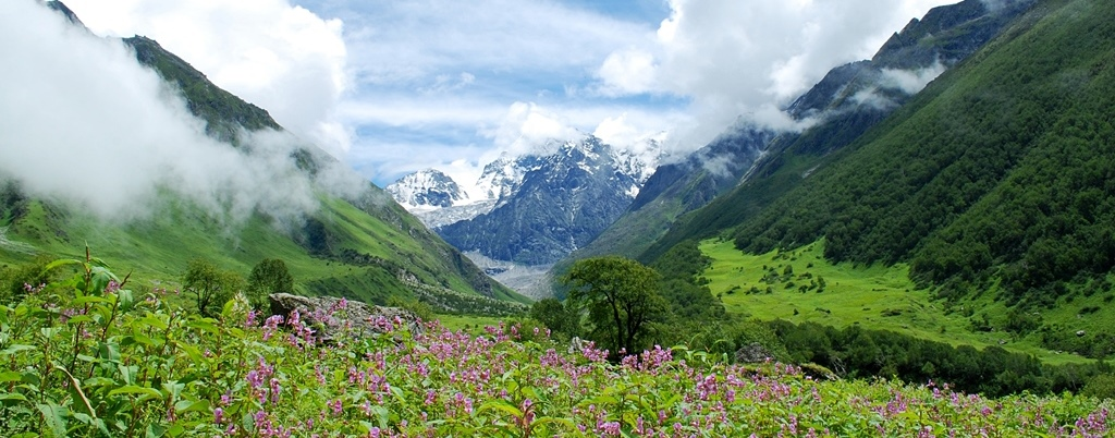 Valley of Flowers - Copy