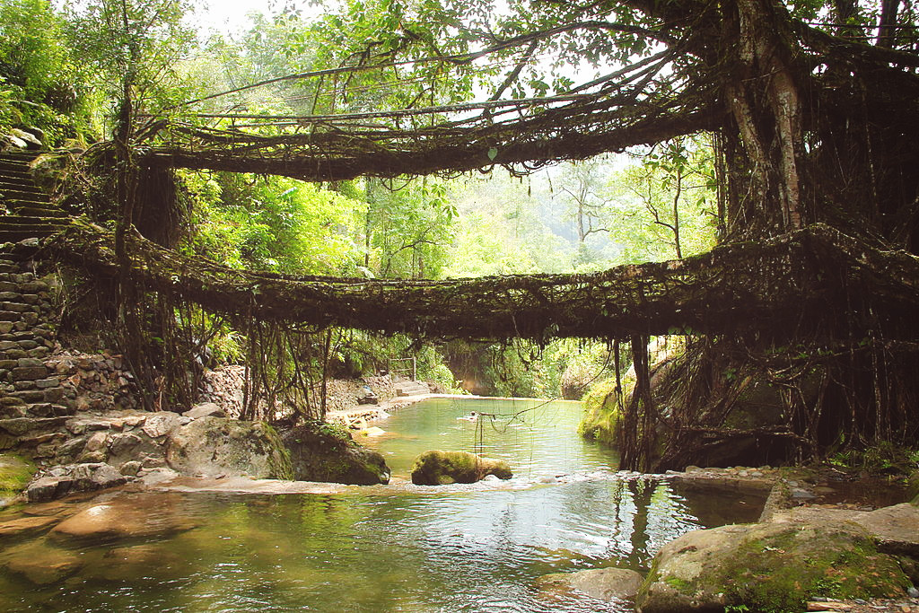Living root bridge in Meghalaya