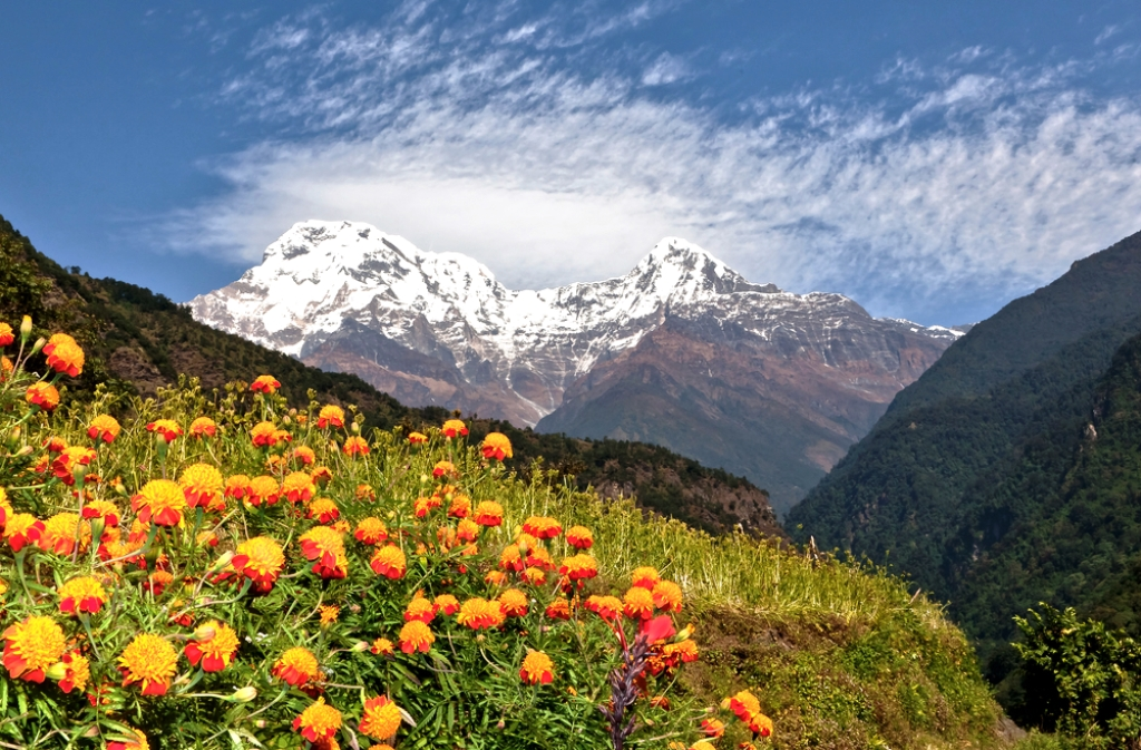 Walk though the grassland of Annapurna Base Camp
