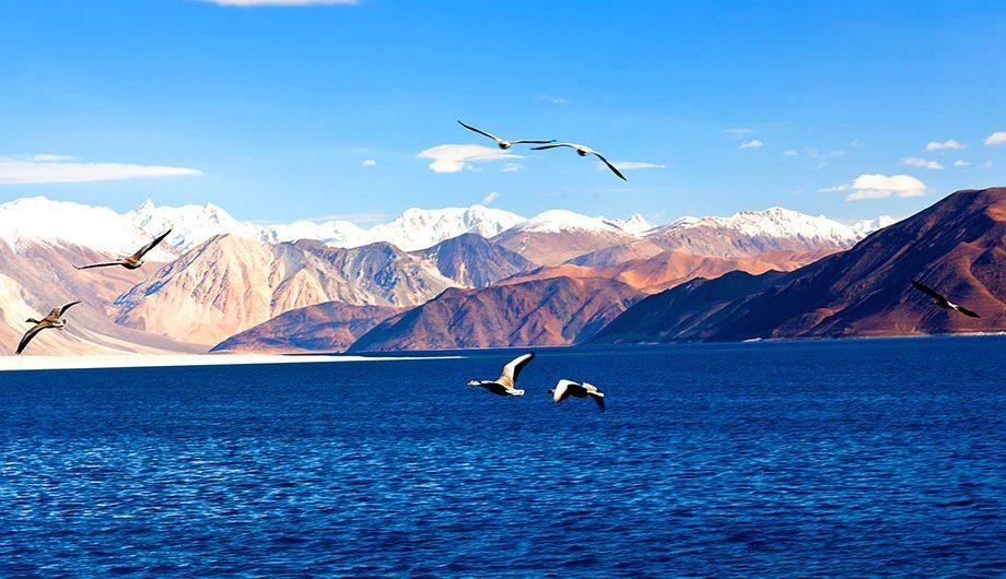moriri-lake-ladakh